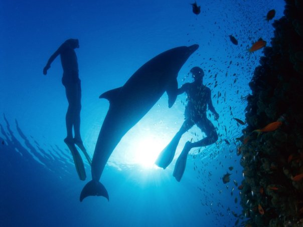 primosten diving sports nature
